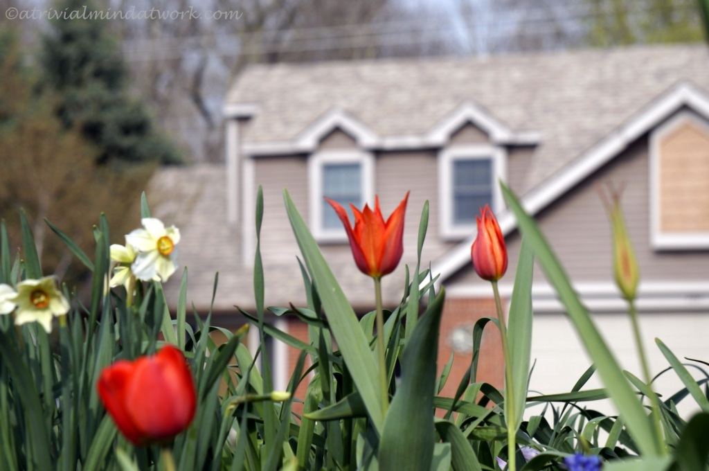 Apr 16 2015_Around the House_0009