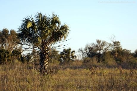 Swamp-land southwest of Houston.