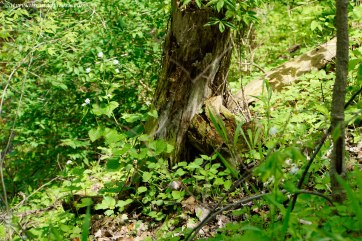 Another hiding spot.