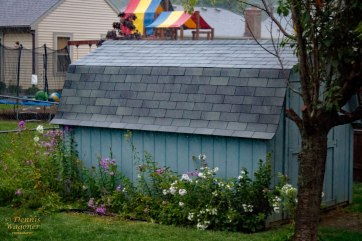 Our shed that we re-shingled!