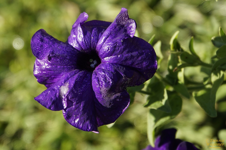 5 Letter Flower Names Ibovnathandedecker